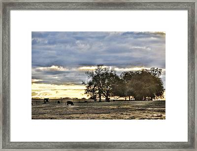 Angus Evening Framed Print by Jan Amiss Photography