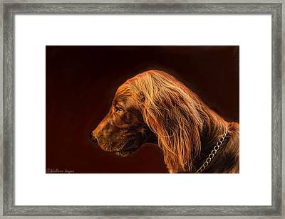 Angus Irish Red Setter Framed Print by Wallaroo Images