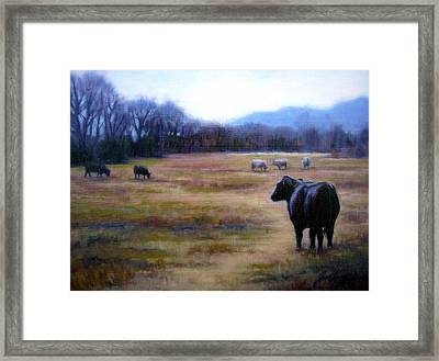 Angus Steer In Franklin Tn Framed Print