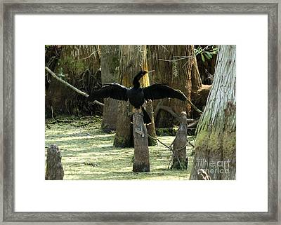 Anhinga At Rest Framed Print by Theresa Willingham
