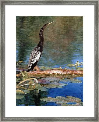Anhinga Framed Print by Carolyn  English