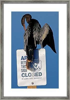 Anhinga Perched On A Signpost Framed Print