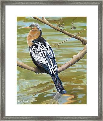 Anhinga Perched Framed Print by Phyllis Beiser