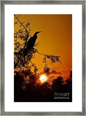 Anhinga Sunset Framed Print by Lynda Dawson-Youngclaus