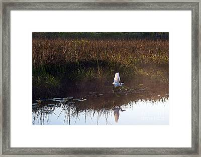 Anhinga Trail Sunrise Framed Print by Bruce Bain