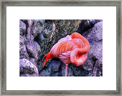 Animal 1 Framed Print