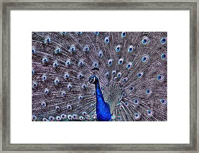 Animal 2 Framed Print