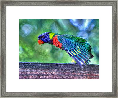 Animal 3 Framed Print