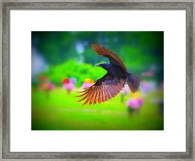 Animal 4 Framed Print