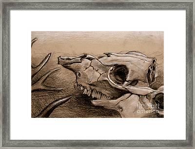 Animal Bones Framed Print