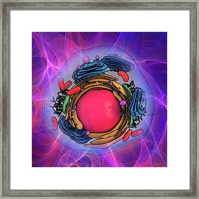 Animal Cell Structure Framed Print