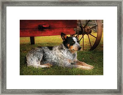 Animal - Dog - Always Faithful Framed Print
