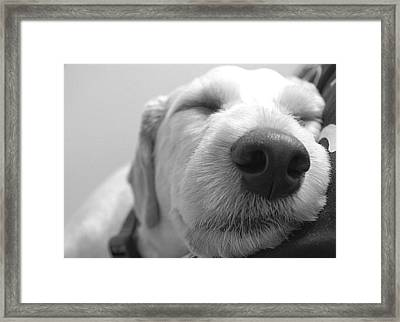 Animal Dog Days Framed Print by Matthew Miller