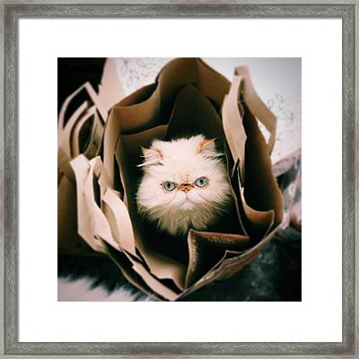 Animal Eye Contact Framed Print by Michael Lofenfeld Photography