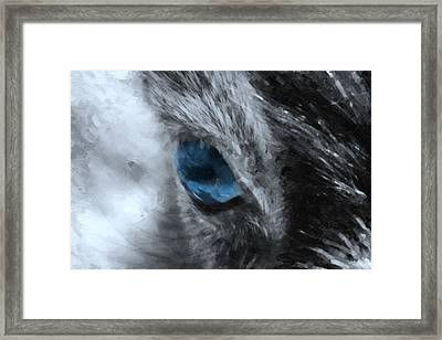 Animal Eye In Blue Framed Print by Tommytechno Sweden
