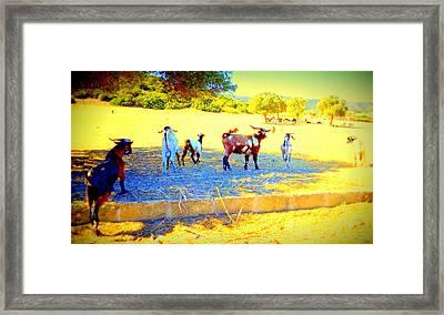 We Were Running Away From Animal Farm Framed Print