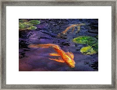 Animal - Fish - There's Something About Koi  Framed Print by Mike Savad