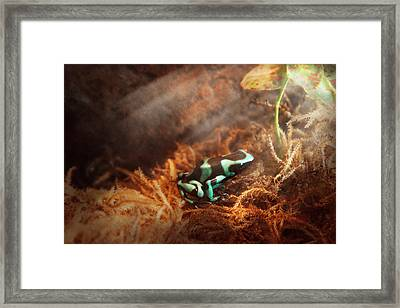 Animal - Frog - Lick The Green Frog Framed Print by Mike Savad