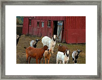 Animal House Framed Print by Diana Angstadt