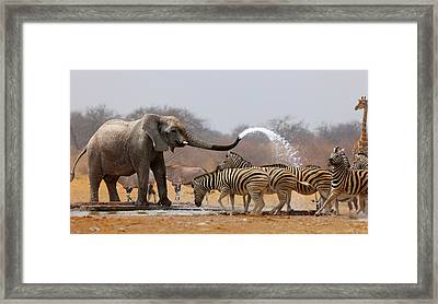 Animal Humour Framed Print by Johan Swanepoel