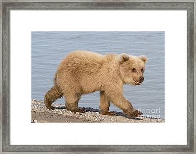 Animal Magnetism Framed Print by Chris Scroggins