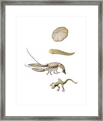 Animal Nervous Systems Framed Print by Mikkel Juul Jensen