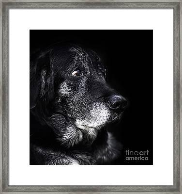 Animal - Old Dog Framed Print by Mythja  Photography