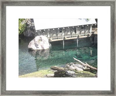 Animal Park - Busch Gardens Tampa - 011313 Framed Print by DC Photographer