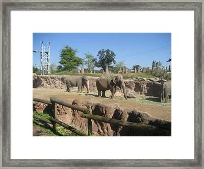 Animal Park - Busch Gardens Tampa - 01132 Framed Print by DC Photographer