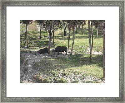Animal Park - Busch Gardens Tampa - 01136 Framed Print by DC Photographer