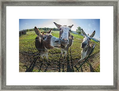 Animal Personalities Smiling Chatty Donkeys Tell Gossip Framed Print by Jani Bryson