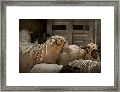 Animal - Sheep - The Order Framed Print by Mike Savad