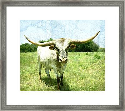 animals - cows -Longhorn in Summer Pasture Framed Print by Ann Powell