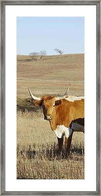 animals cows photography LONGHORN IN WINTER  Framed Print by Ann Powell