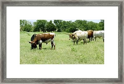 animals - cows - Summer Grazing Framed Print by Ann Powell