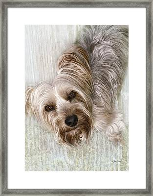 animals - dogs - Rascal Framed Print by Ann Powell