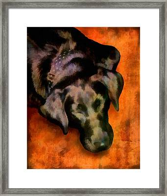 animals- dogs Sleeping Dog Framed Print by Ann Powell