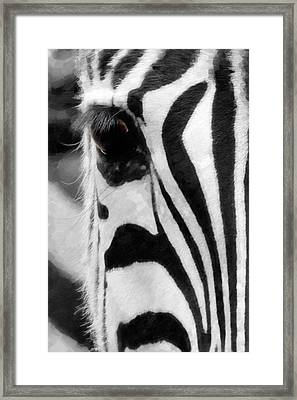 Animal's Eye Zebra Framed Print by Tommytechno Sweden