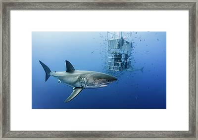 Animals In Cage Framed Print