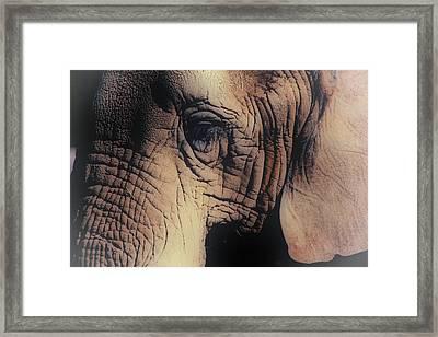 Animals Wrinkle Too Framed Print by Karol Livote