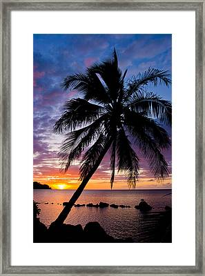 Anini Palm Framed Print by Adam Pender