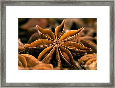 Anise Star Framed Print