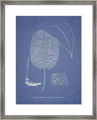 Anisogonium Cordifolium Framed Print by Aged Pixel