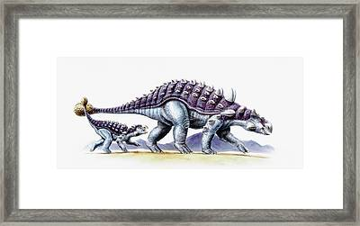 Ankylosaurus And Young Framed Print