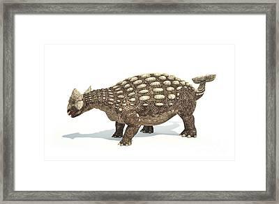 Ankylosaurus Dinosaur On White Framed Print