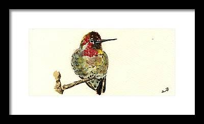 Annas Hummingbird Framed Prints