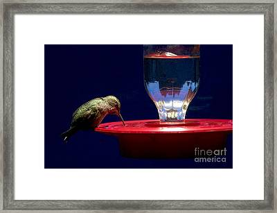 Annas Hummingbird At Feeder Framed Print