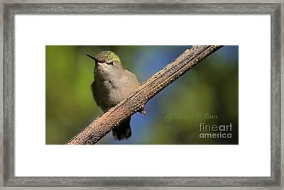 Anna's Hummingbird Baby Framed Print by Heather Coen