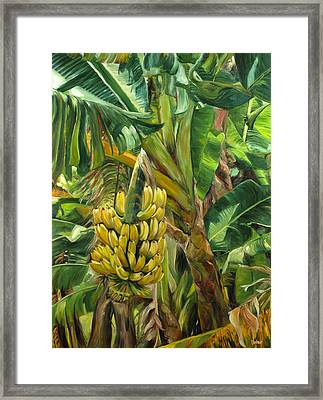 Annie's Bananas Framed Print by Stacy Vosberg