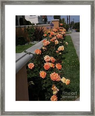 Annie's Roses Framed Print